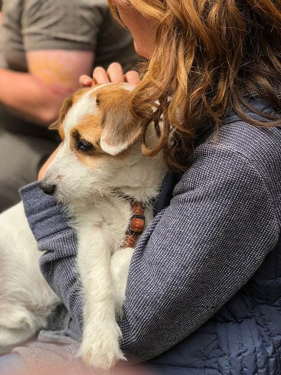 Dog clinging to a woman
