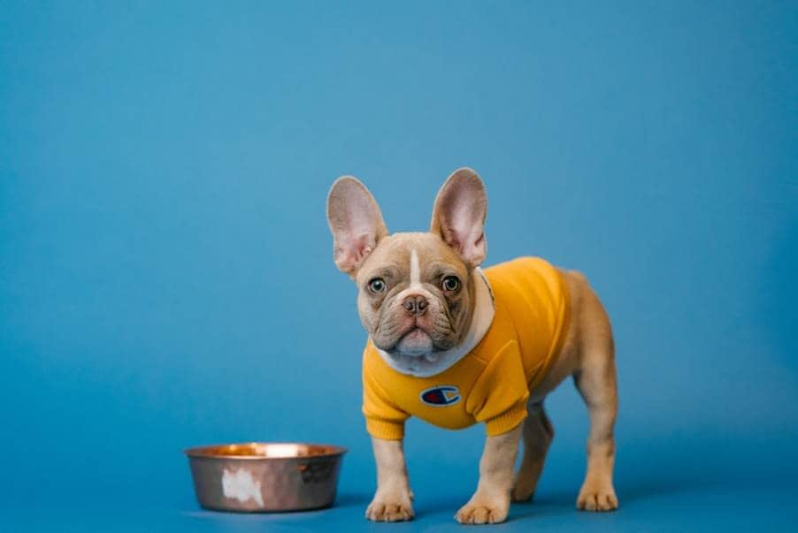 A Dog with A Bowl Beside it Standing On A Blue Surface