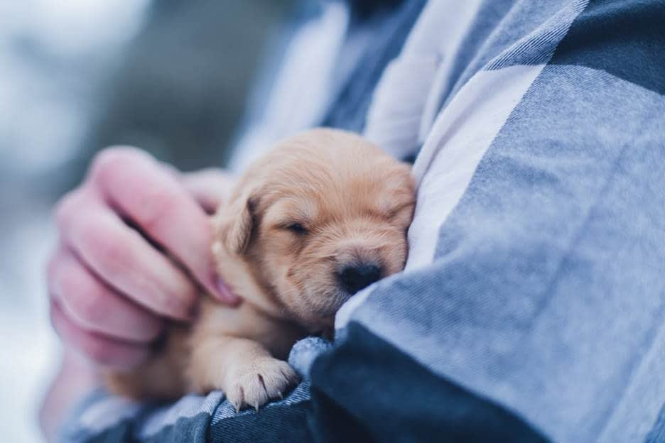 Dog parent bonding with puppy