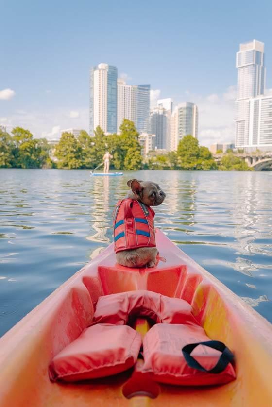 Dog enjoying boating in a safety vest