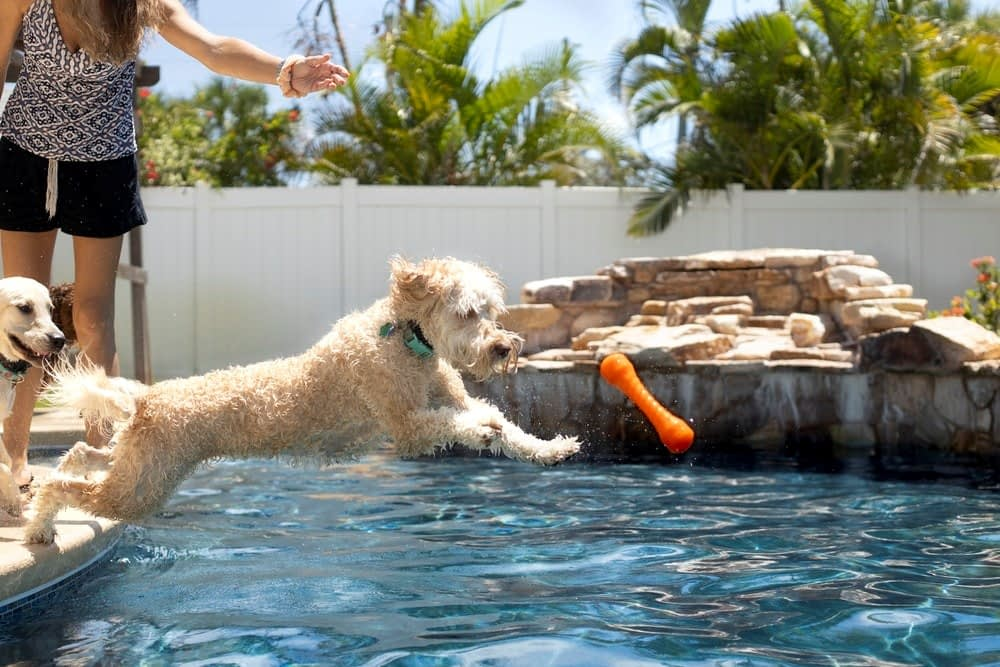 Dogs playing fetch in the pool