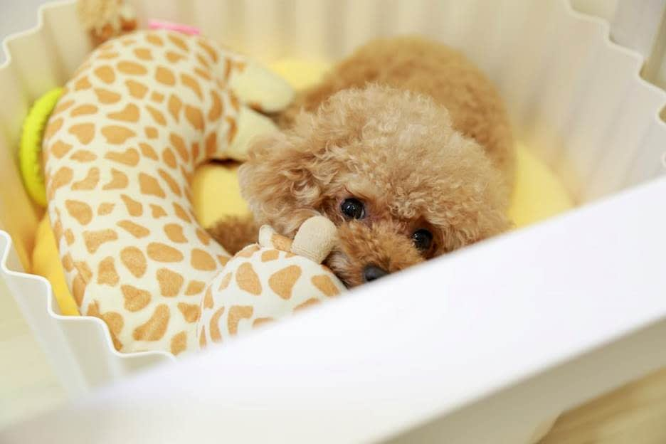 Puppy with a toy in its bed