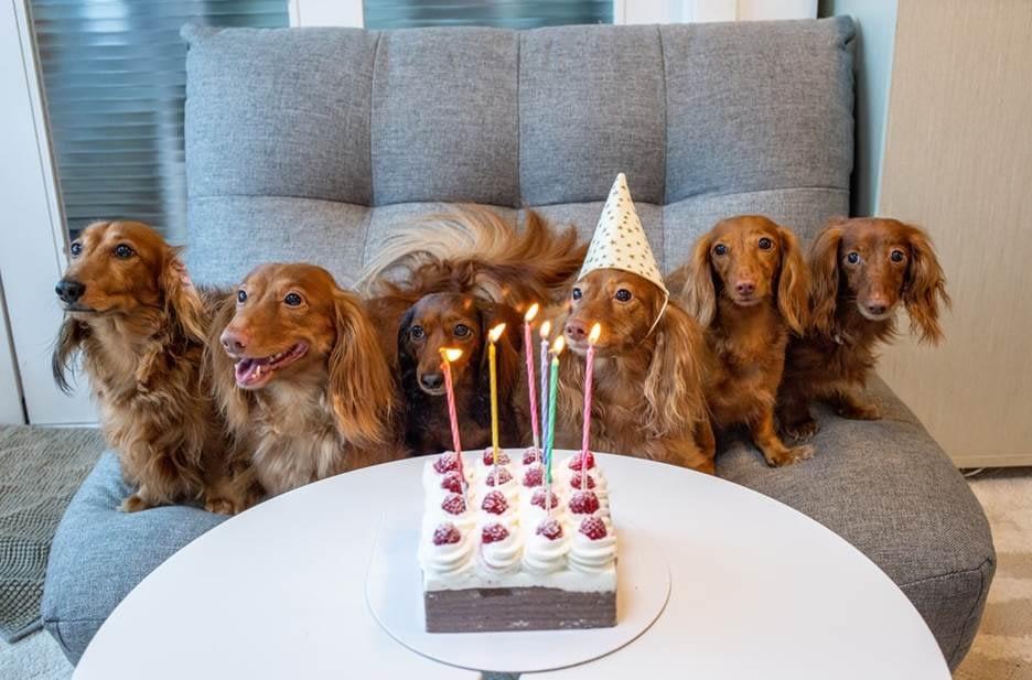 Dog squad at a birthday celebration