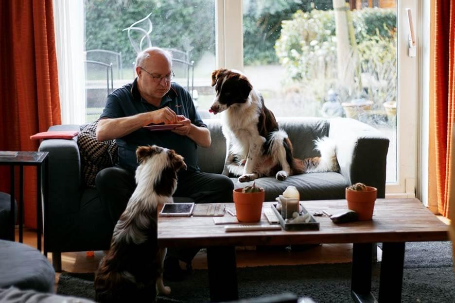 Dogs eating scrap food of owner