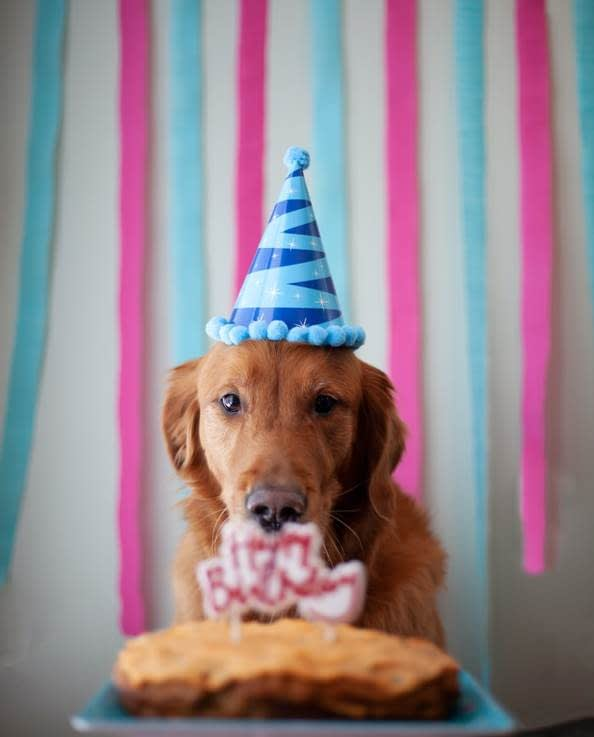 Dog's birthday celebration