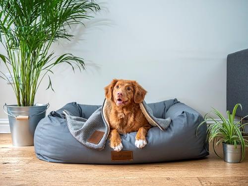 A dog sitting on a sofa