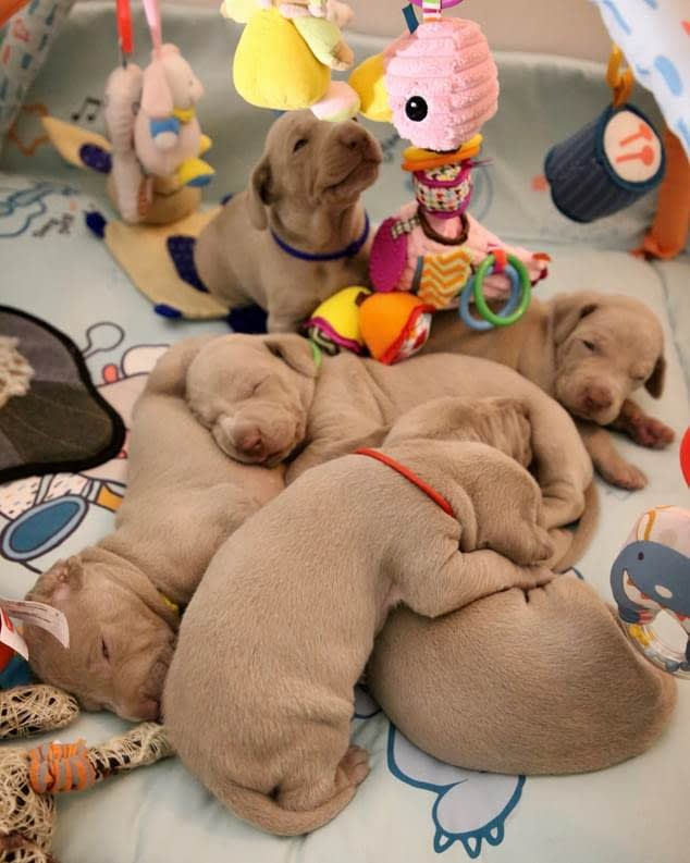 Puppies playing with their toys