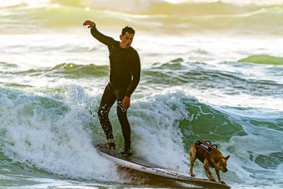 A Male Surfer Riding the Waves with His Vested Dog