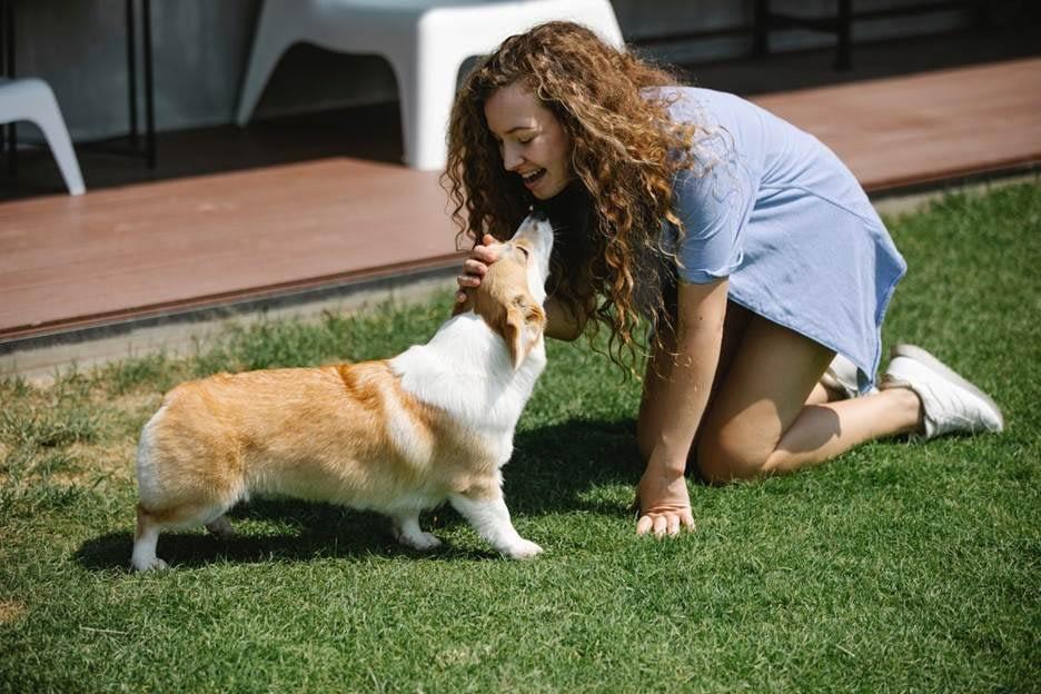 Dog kissing a woman