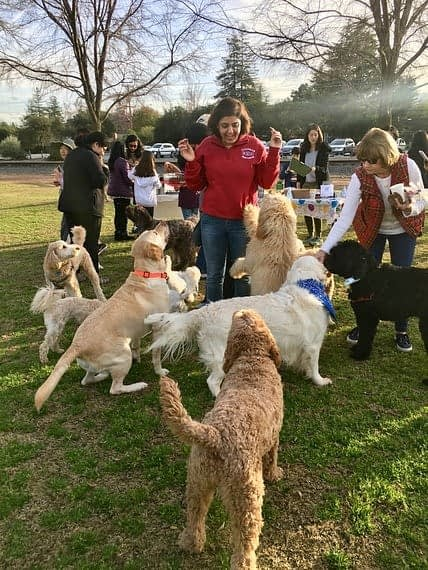 Women giving treats to dogs in a local dog park