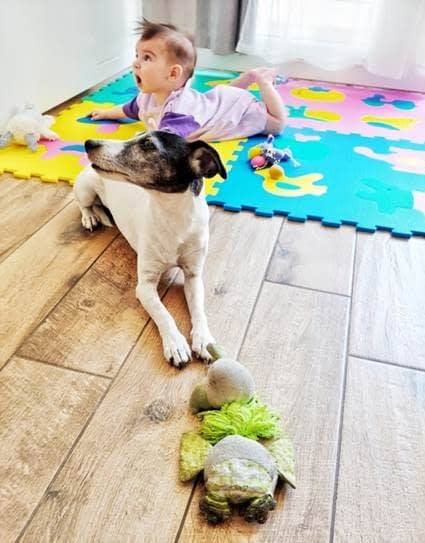 A Baby On Its Belly On A Rug, and A Dog Sitting In Front of It On the Wood Floor